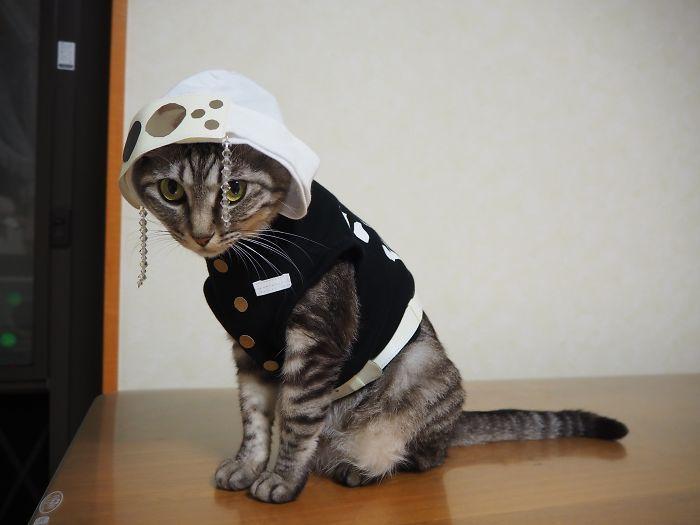 Em seu tempo livre, esse cara faz fantasias de anime para seus gatos 34