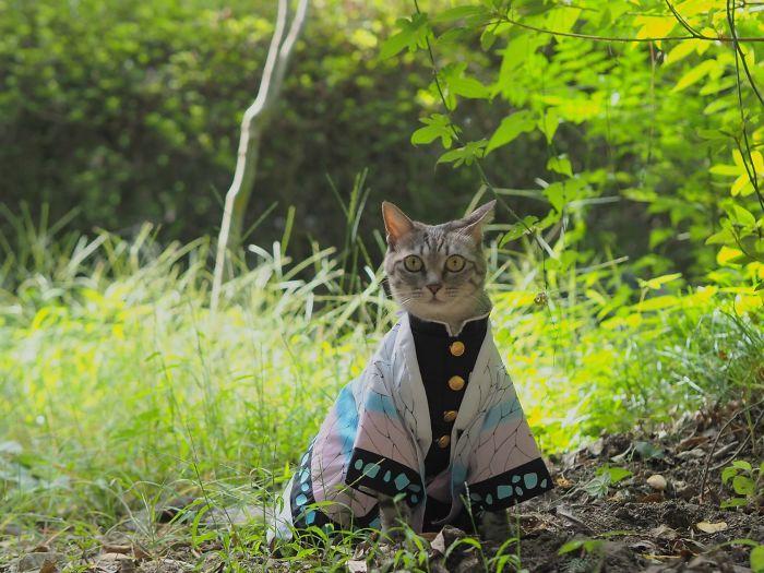 Em seu tempo livre, esse cara faz fantasias de anime para seus gatos 35