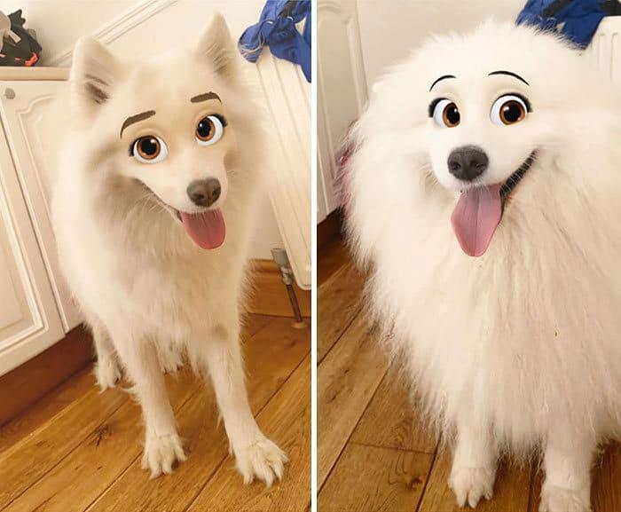 Este novo filtro Snapchat faz seu cachorro parecer um personagem da Disney (30 fotos) 2
