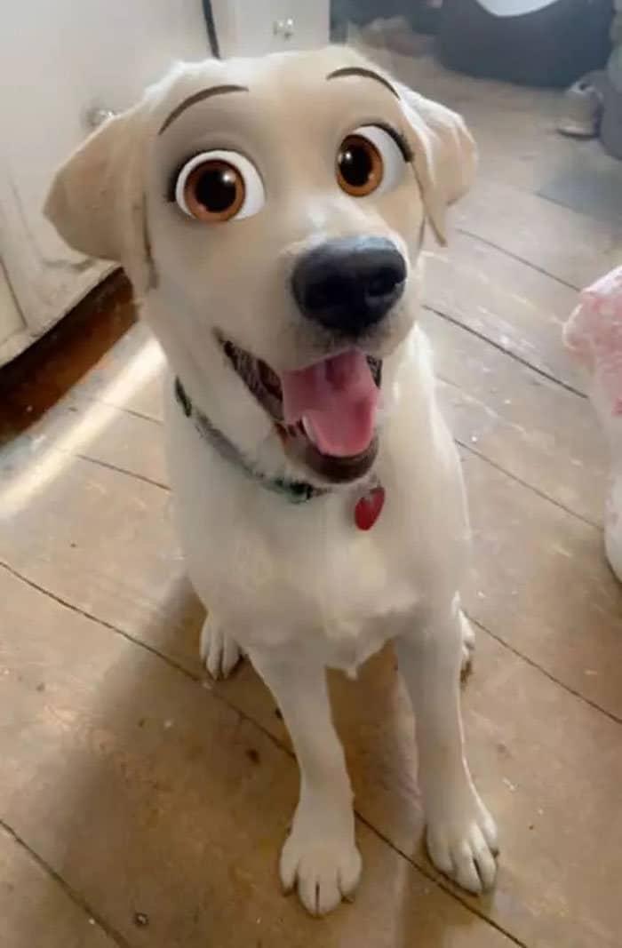 Este novo filtro Snapchat faz seu cachorro parecer um personagem da Disney (30 fotos) 3