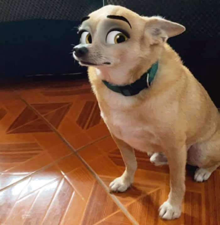 Este novo filtro Snapchat faz seu cachorro parecer um personagem da Disney (30 fotos) 11