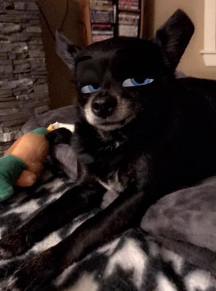 Este novo filtro Snapchat faz seu cachorro parecer um personagem da Disney (30 fotos) 12