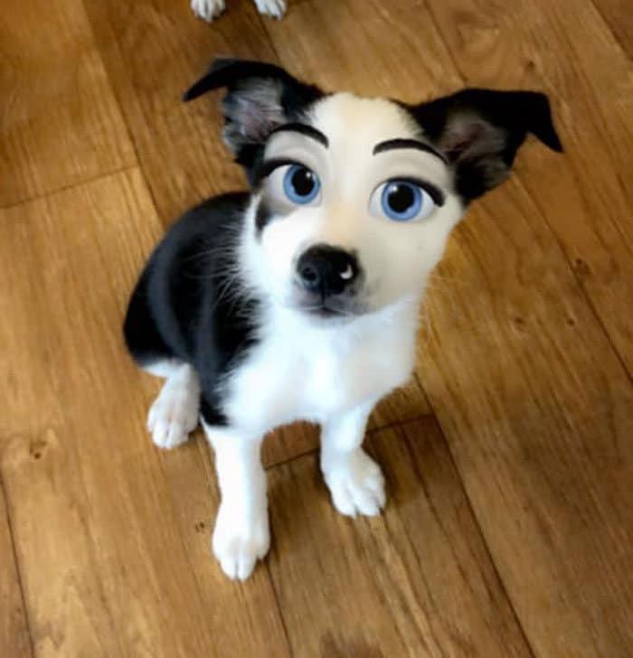 Este novo filtro Snapchat faz seu cachorro parecer um personagem da Disney (30 fotos) 13