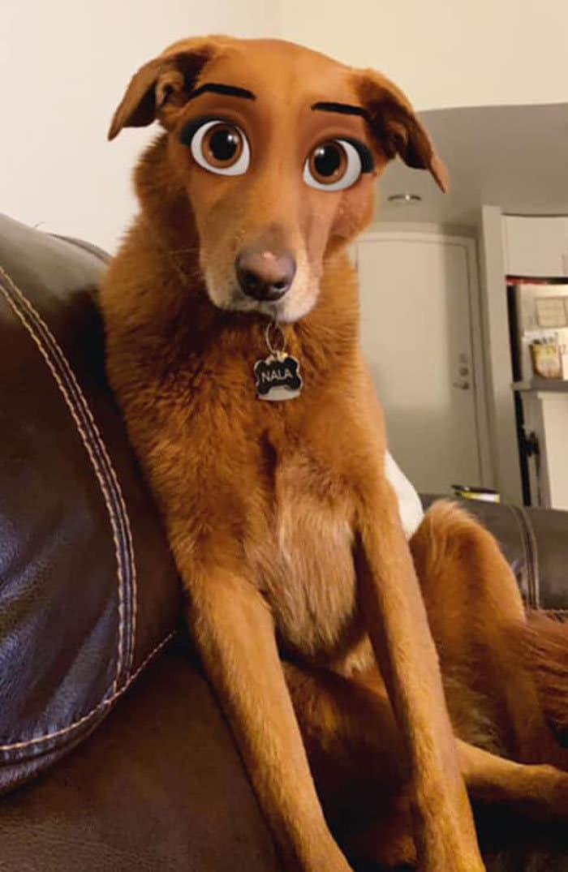 Este novo filtro Snapchat faz seu cachorro parecer um personagem da Disney (30 fotos) 15