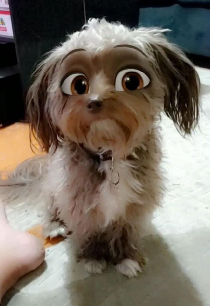 Este novo filtro Snapchat faz seu cachorro parecer um personagem da Disney (30 fotos) 16