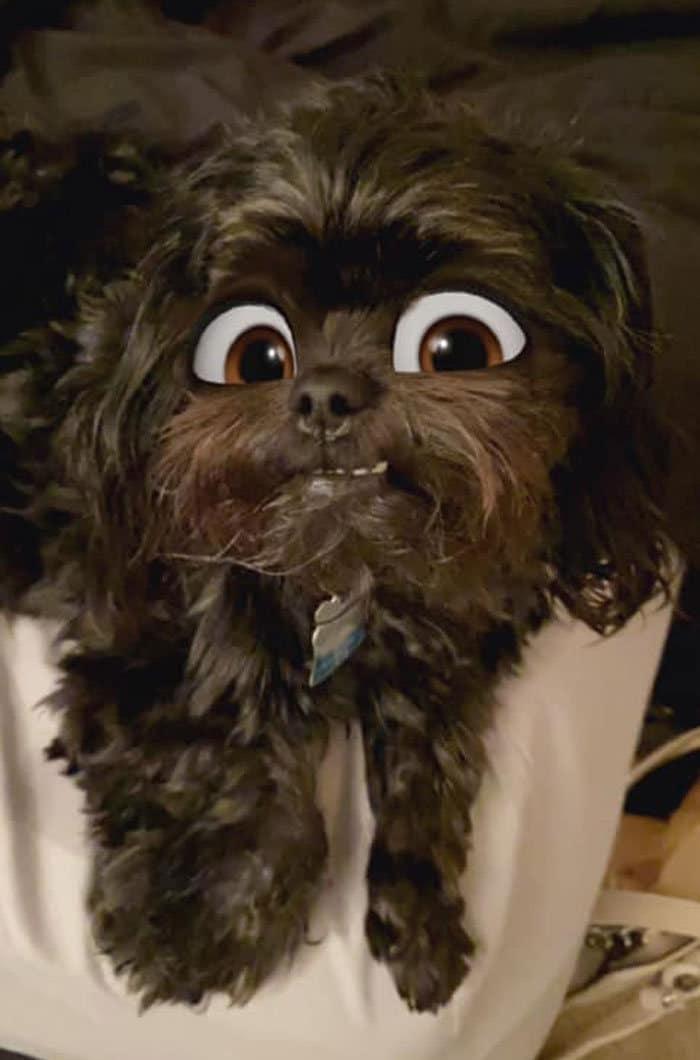 Este novo filtro Snapchat faz seu cachorro parecer um personagem da Disney (30 fotos) 18