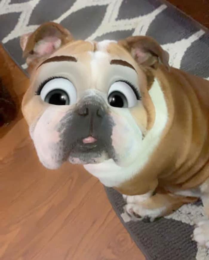 Este novo filtro Snapchat faz seu cachorro parecer um personagem da Disney (30 fotos) 19
