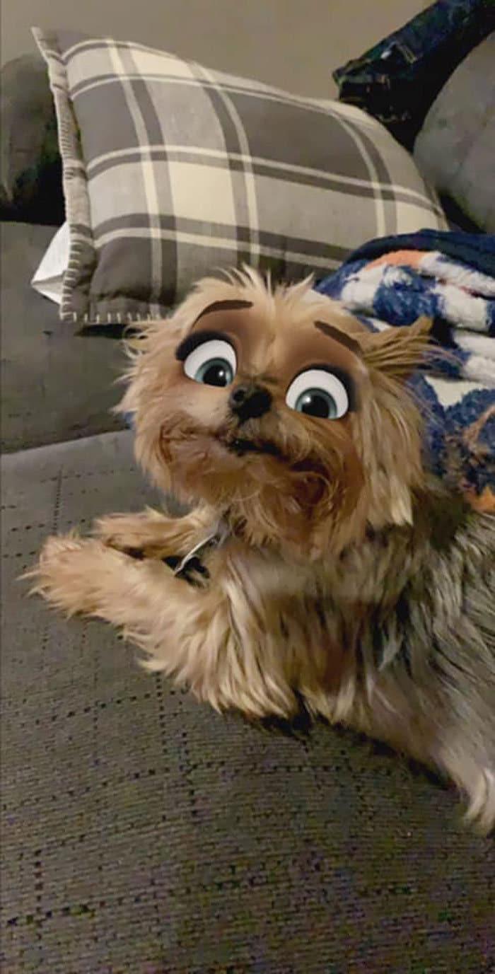 Este novo filtro Snapchat faz seu cachorro parecer um personagem da Disney (30 fotos) 24