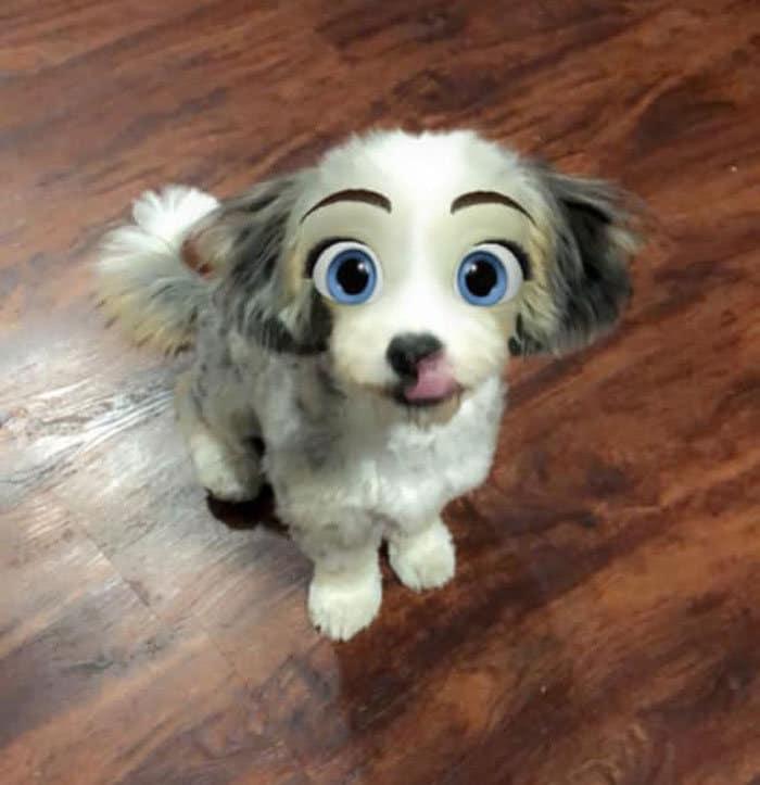 Este novo filtro Snapchat faz seu cachorro parecer um personagem da Disney (30 fotos) 25