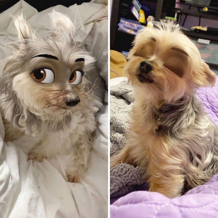 Este novo filtro Snapchat faz seu cachorro parecer um personagem da Disney (30 fotos) 28
