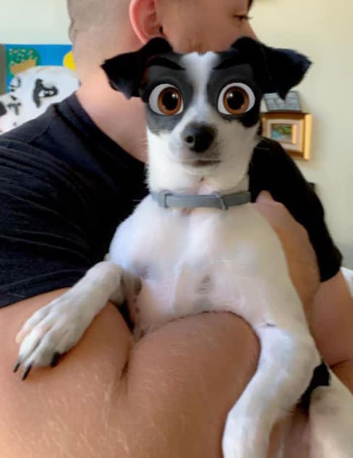 Este novo filtro Snapchat faz seu cachorro parecer um personagem da Disney (30 fotos) 30