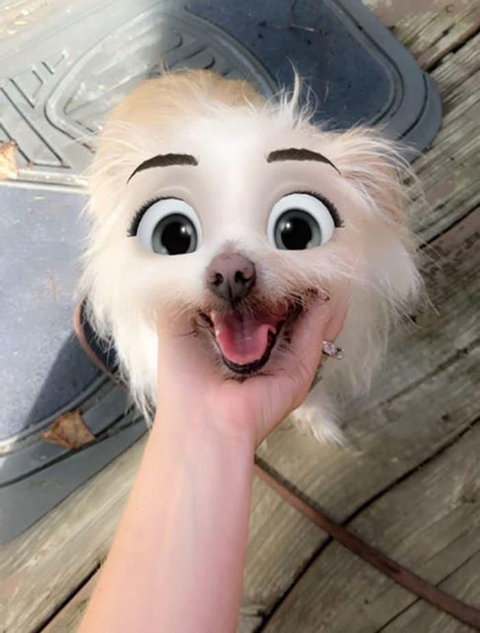 Este novo filtro Snapchat faz seu cachorro parecer um personagem da Disney (30 fotos) 31