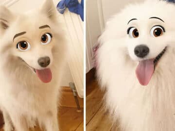 Este novo filtro Snapchat faz seu cachorro parecer um personagem da Disney (30 fotos) 6