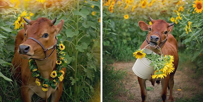 37 fotos de animais engraçados que vão deixar você com um grande sorriso 25