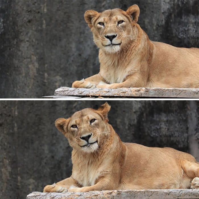 37 fotos de animais engraçados que vão deixar você com um grande sorriso 27