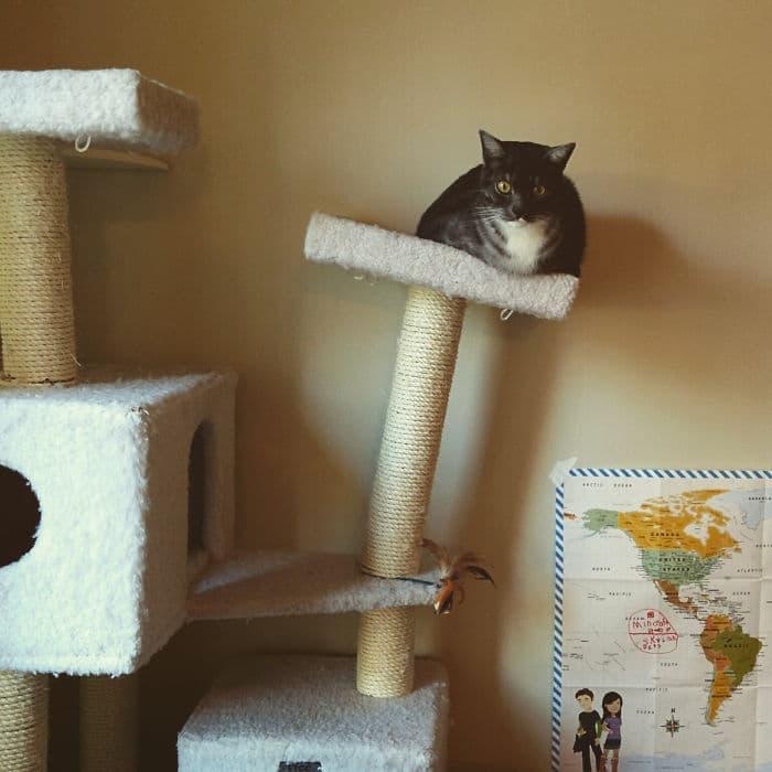 36 gatos desafiando as leis da física 2