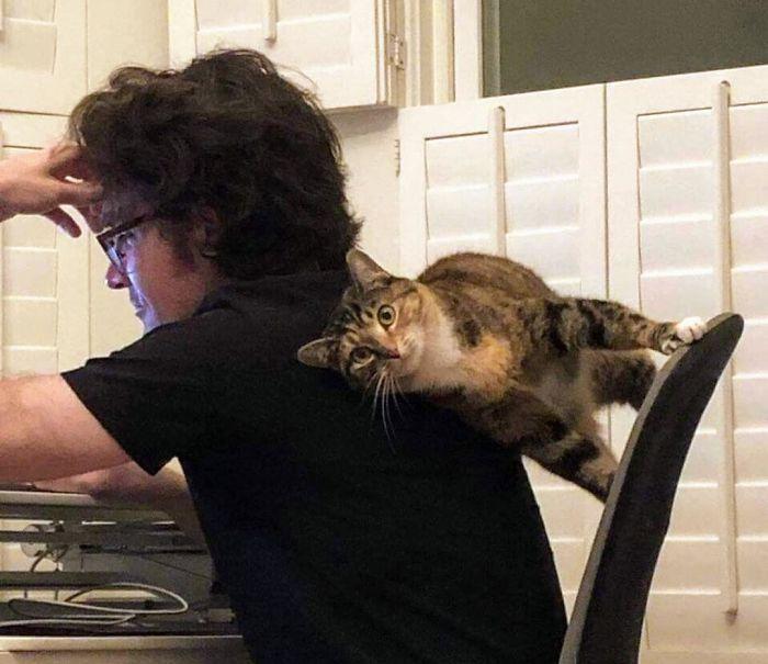 36 gatos desafiando as leis da física 3