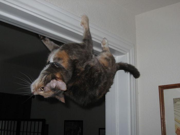 36 gatos desafiando as leis da física 4