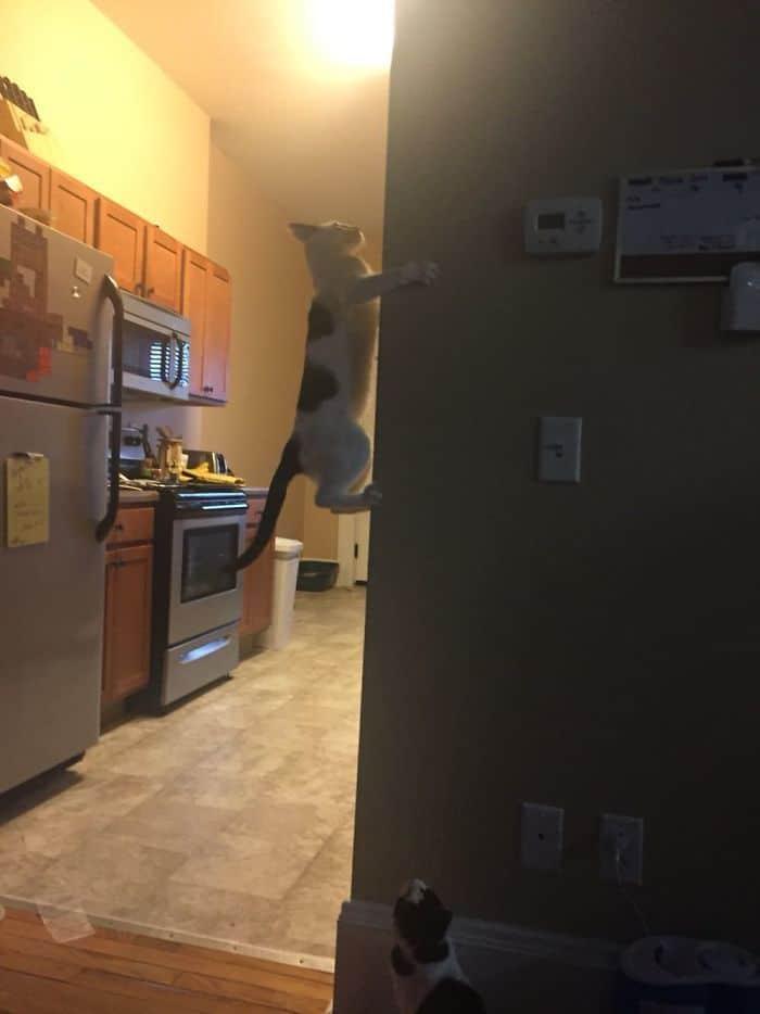 36 gatos desafiando as leis da física 5