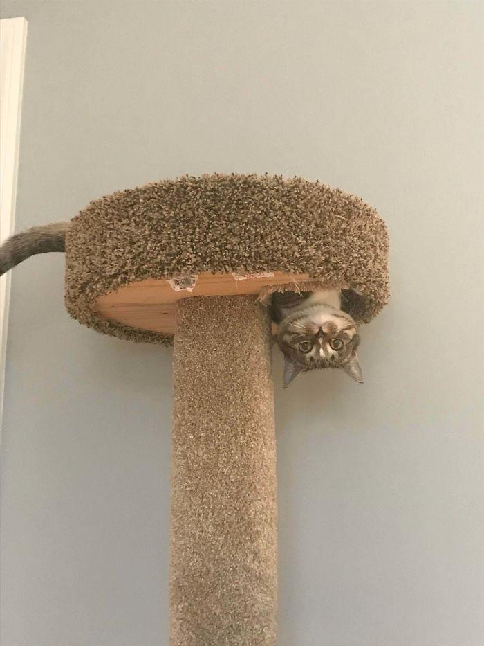 36 gatos desafiando as leis da física 7