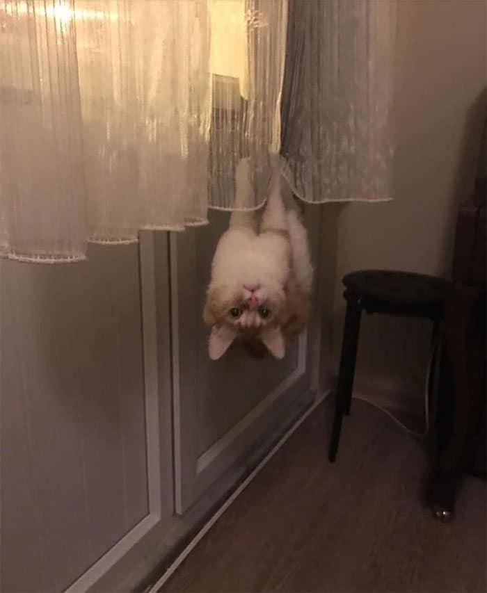 36 gatos desafiando as leis da física 9
