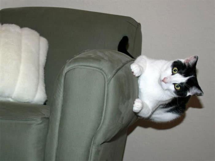 36 gatos desafiando as leis da física 11
