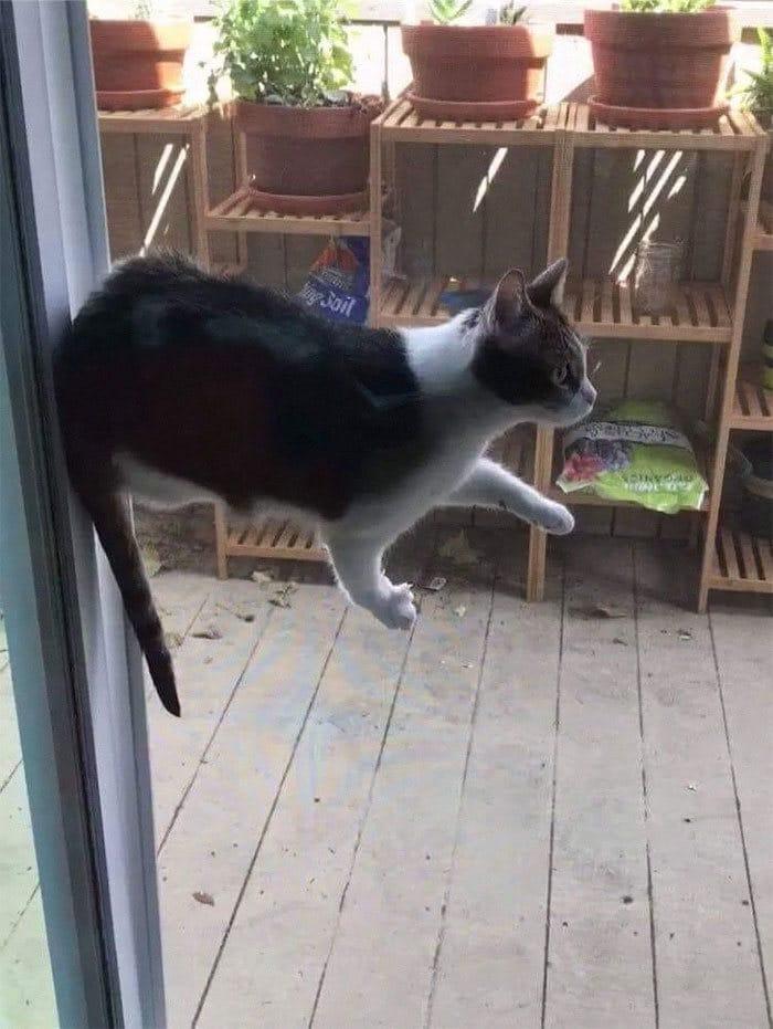36 gatos desafiando as leis da física 12