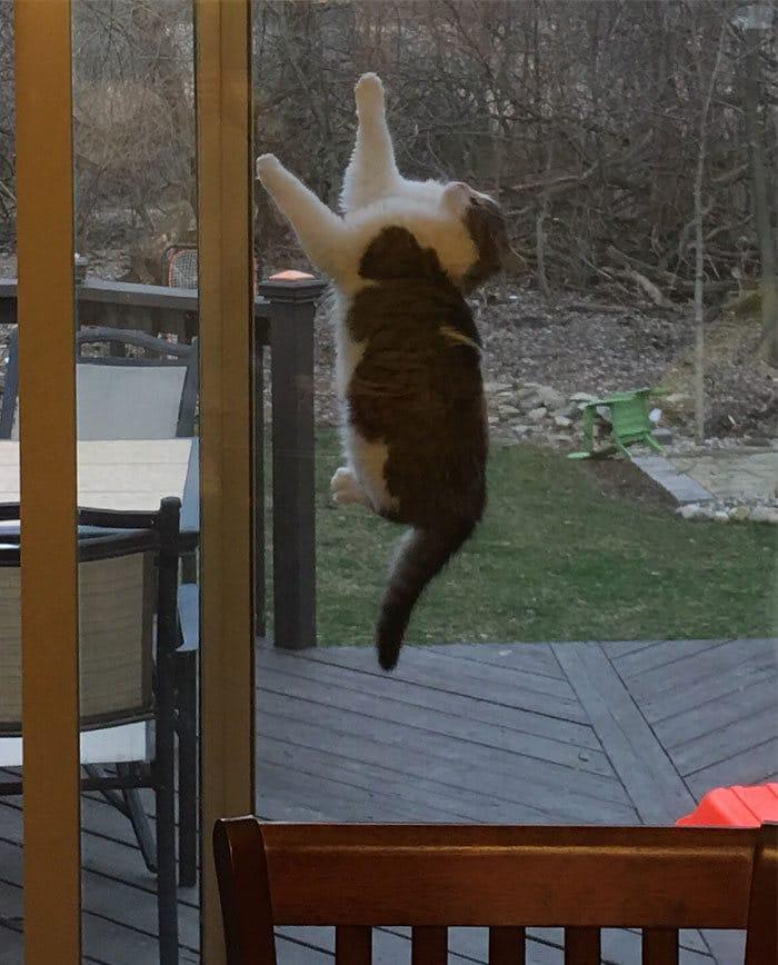 36 gatos desafiando as leis da física 19