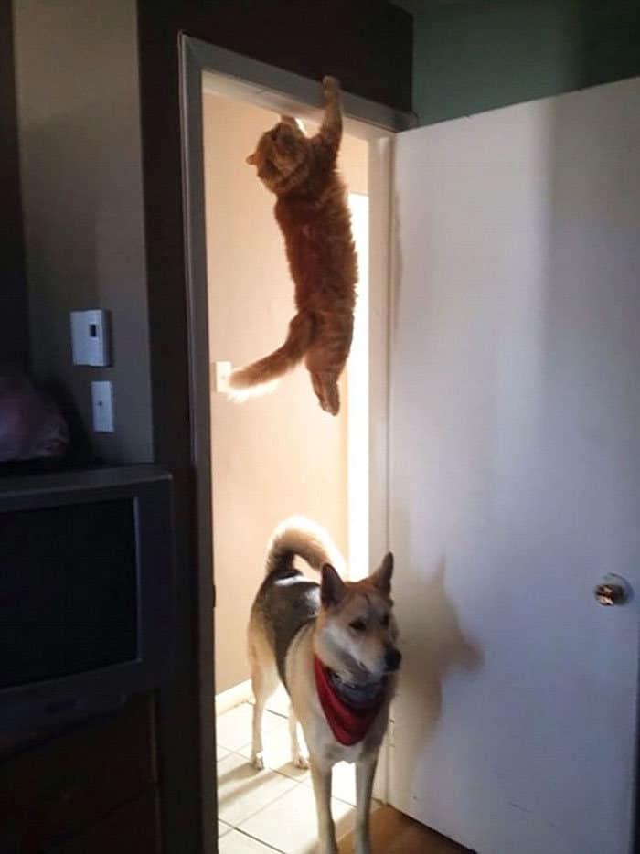 36 gatos desafiando as leis da física 20