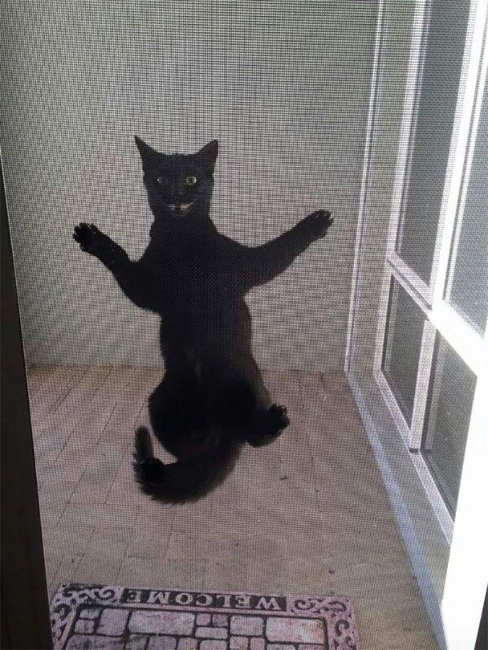 36 gatos desafiando as leis da física 23