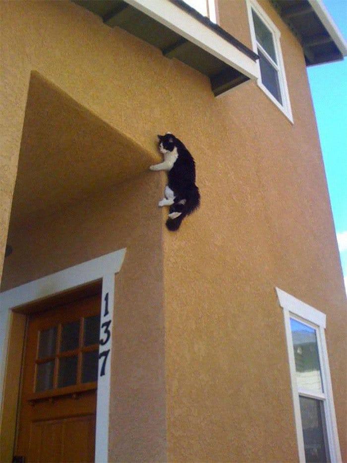 36 gatos desafiando as leis da física 24