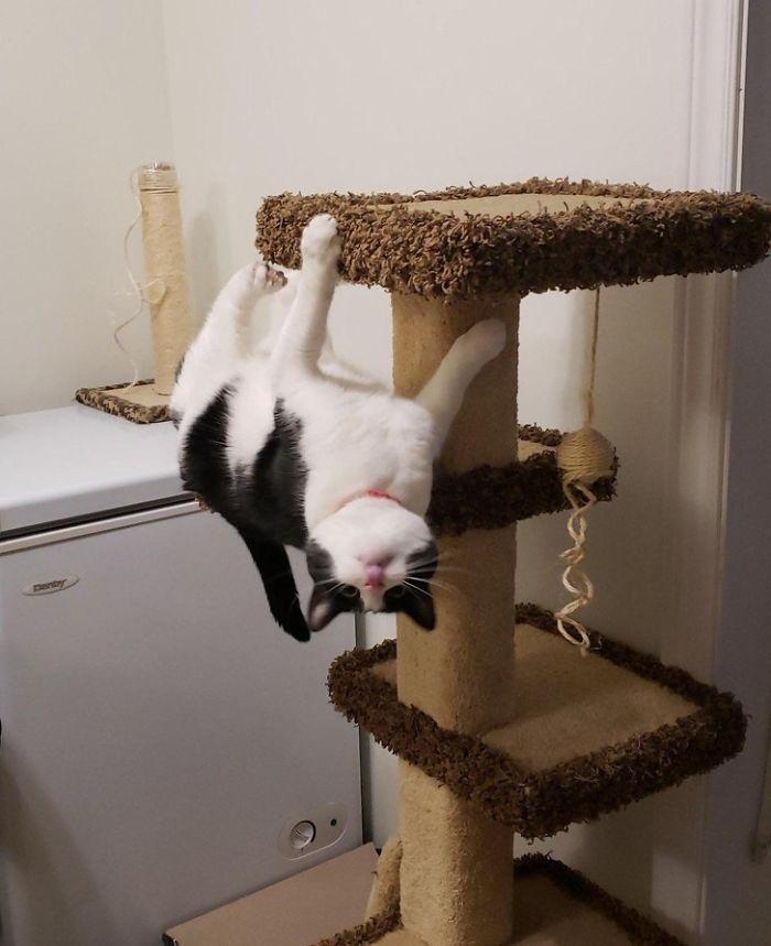 36 gatos desafiando as leis da física 26