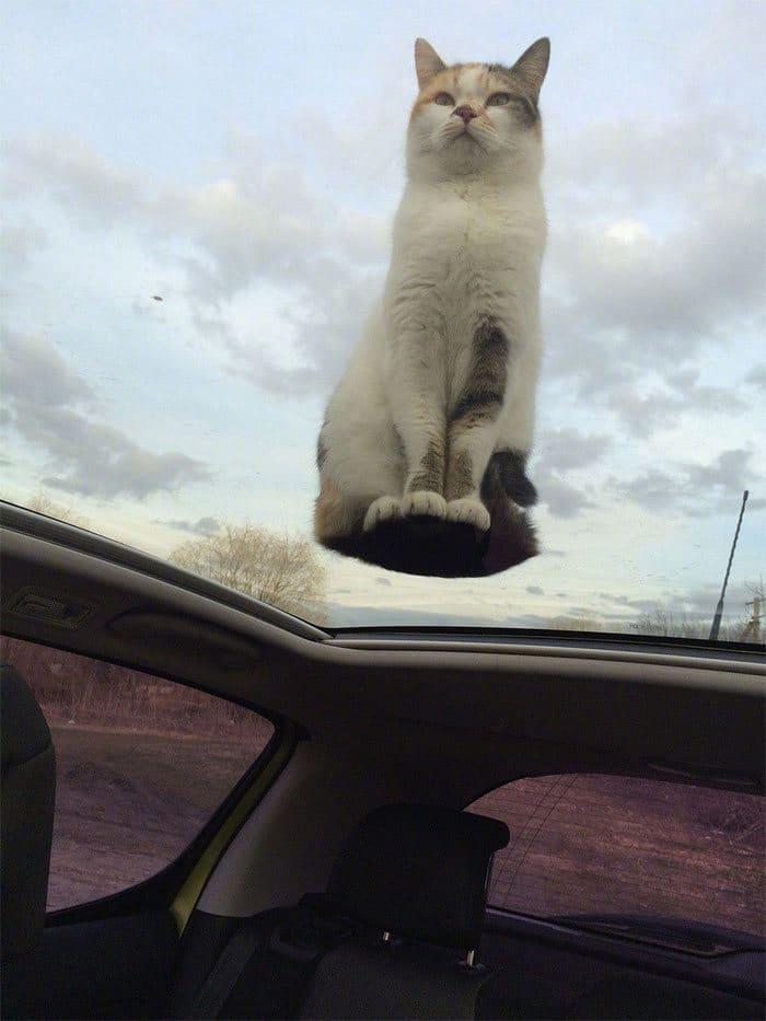 36 gatos desafiando as leis da física 28