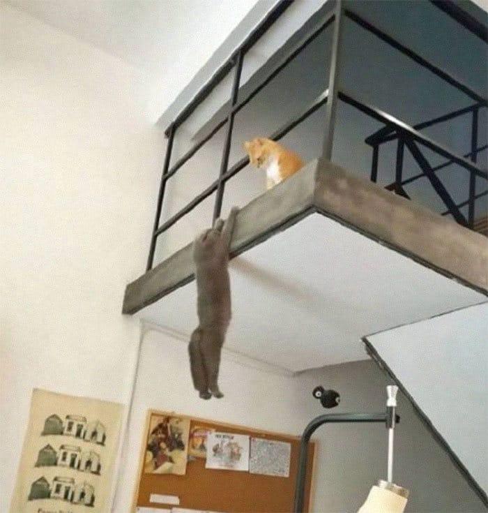 36 gatos desafiando as leis da física 29