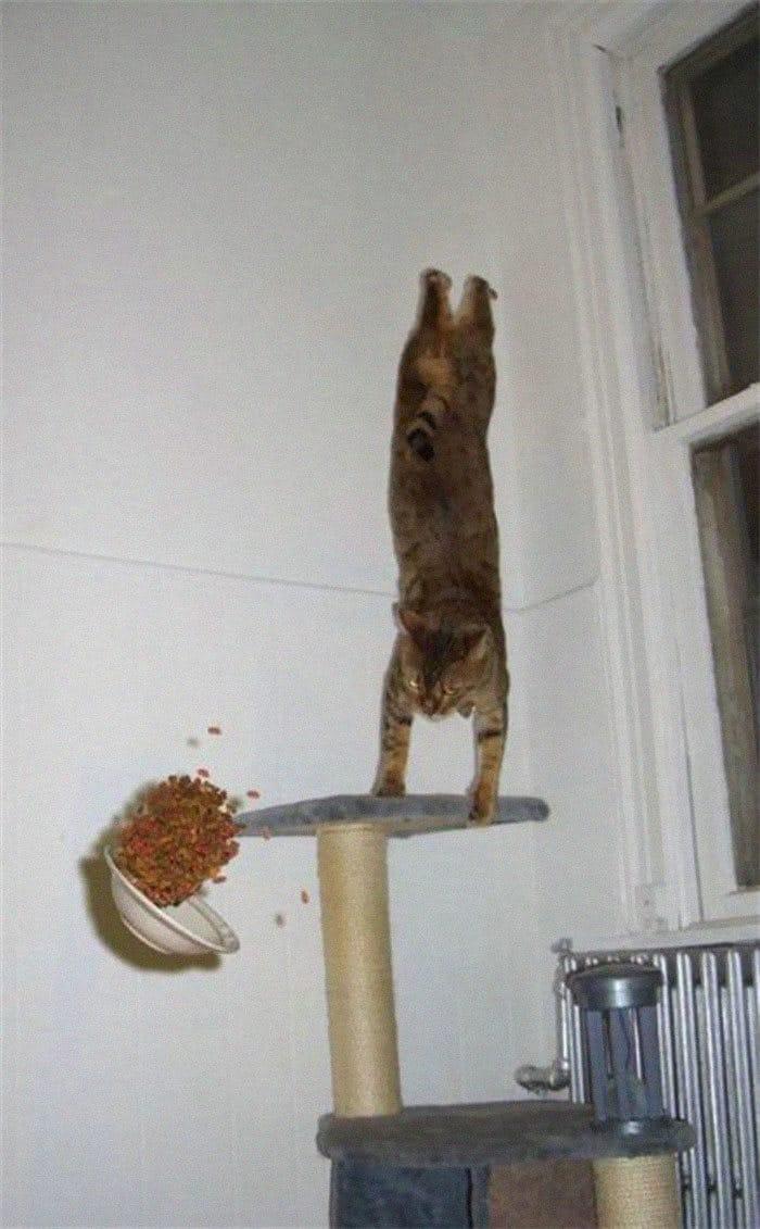 36 gatos desafiando as leis da física 30