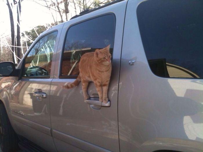 36 gatos desafiando as leis da física 35