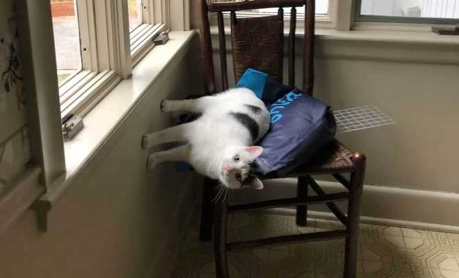 36 gatos desafiando as leis da física 127