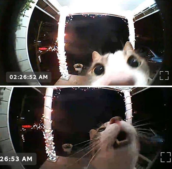 28 gatos dramáticos que merecem um Oscar 7