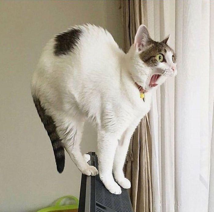 28 gatos dramáticos que merecem um Oscar 10