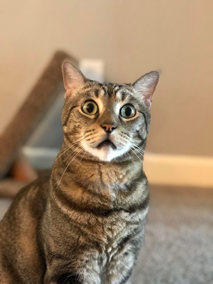 28 gatos dramáticos que merecem um Oscar 19