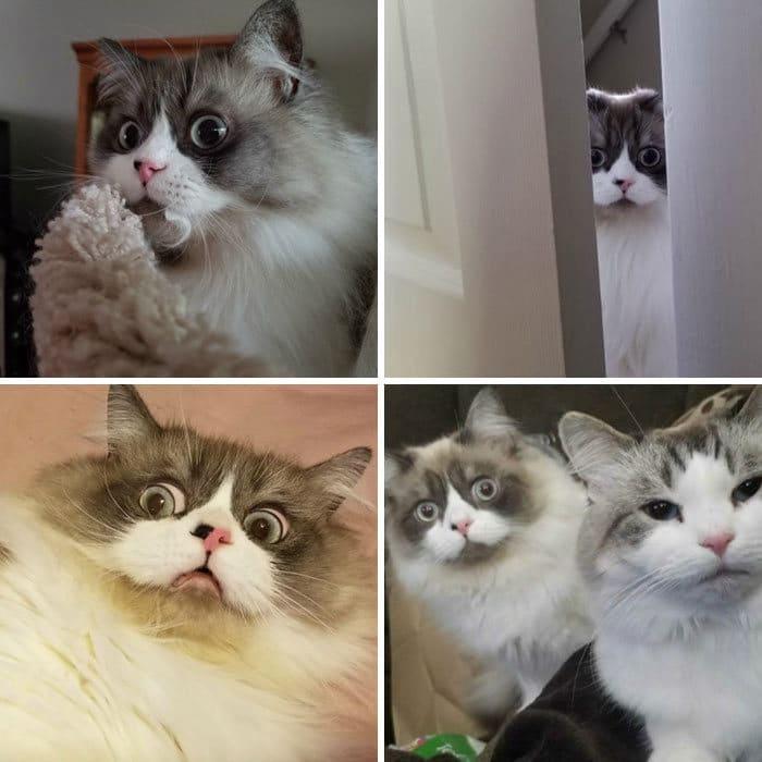 28 gatos dramáticos que merecem um Oscar 23