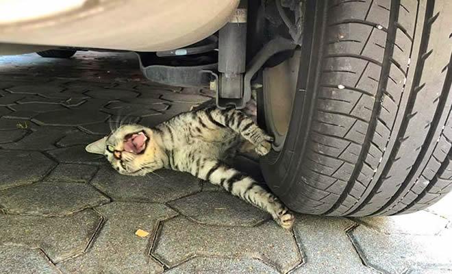 28 gatos dramáticos que merecem um Oscar 33
