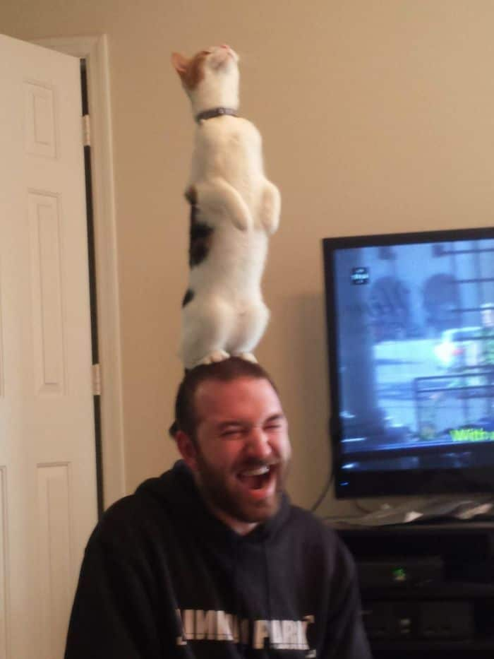 30 gatos que decidiram fingir ser pinguins 13