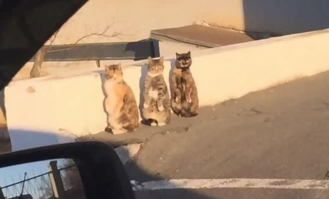 30 gatos que decidiram fingir ser pinguins 164
