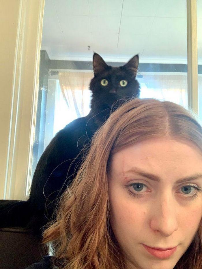 16 gatos que só querem ficar perfeitamente sozinho 4