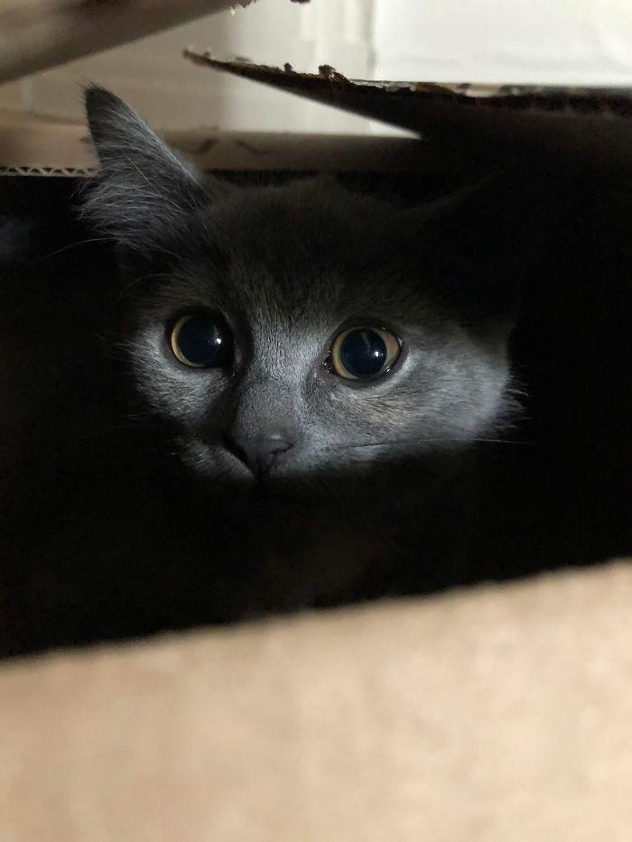 43 adoráveis gatinhos no meio de um ataque furtivo 2
