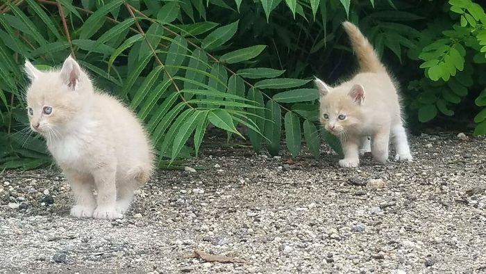 43 adoráveis gatinhos no meio de um ataque furtivo 3