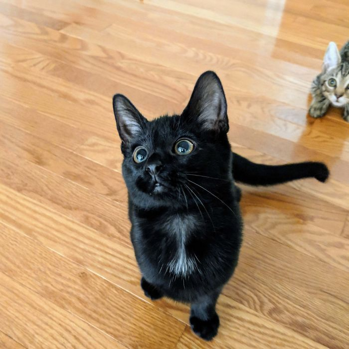 43 adoráveis gatinhos no meio de um ataque furtivo 4