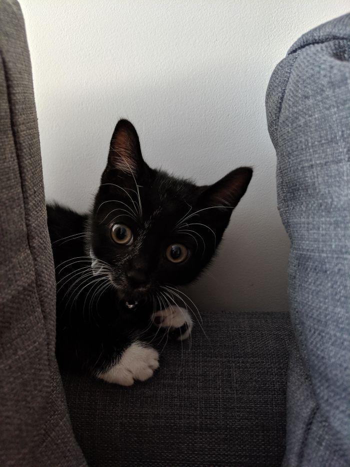 43 adoráveis gatinhos no meio de um ataque furtivo 5