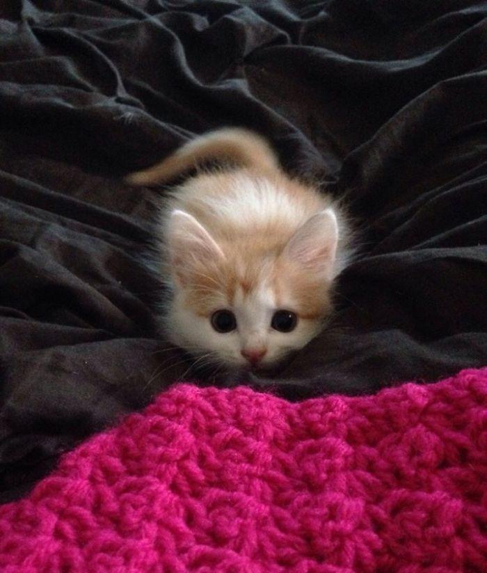 43 adoráveis gatinhos no meio de um ataque furtivo 7